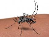 Accions en el control de les plagues al municipi