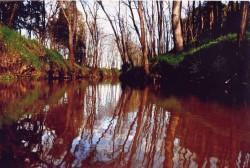 Riera Verneda. Autor: Joan Carles Codolà (AMCS)